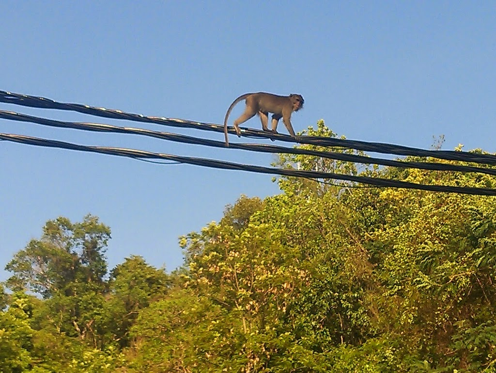 Monkey on the electricity wires, sailing from Phuket to Langkawi
